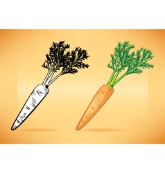 Carrot with top vector