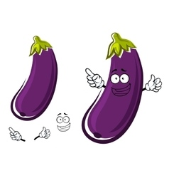Purple eggplant or aubergine vegetable vector