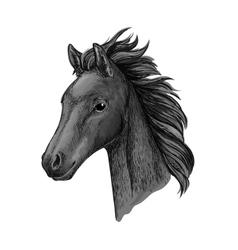 Black horse head sketch portrait vector