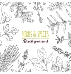 Hand drawn herbs and spices background culinary vector