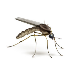 mosquito on white background vector image vector image