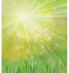 Spring grass background vector