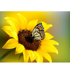 Yellow sunflower with a butterfly vector