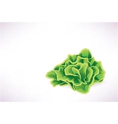 Lettuce vector