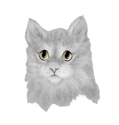 cat baby cute vector image vector image