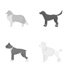 Collie labrador boxer poodle dog breeds set vector