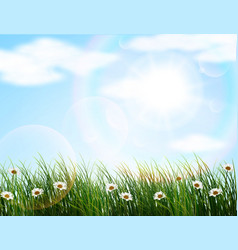 Nature background with flowers and grass vector image vector image