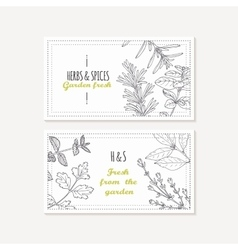 Business card templates set with hand drawn spicy vector image