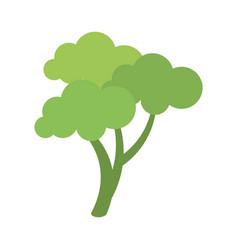 healthy vegetable broccoli vector image vector image