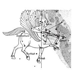 Sagittarius constellation vintage vector