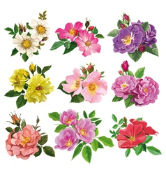 set of colorful flowers of wild rose vector image vector image