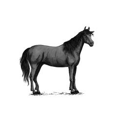 Black wild horse standing sketch vector