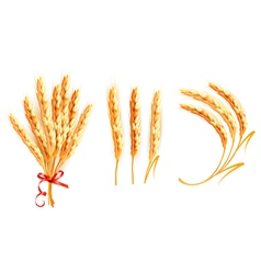 Set of ears of wheat vector image
