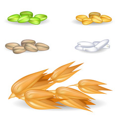 Oat grains with other harvest in piles on white vector