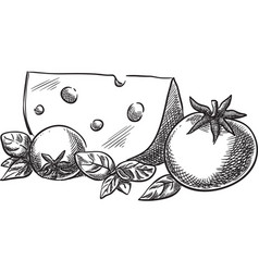 Cheese and tomato vector