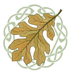 Oak leaf in autumn coloring and celtic magic vector