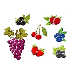 Sweet ripe isolated berries and fruits vector image vector image