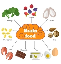 Brain food flat infographics vector