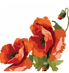 Watercolor poppies for greeting cards vector