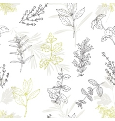 Seamless pattern with hand drawn spicy herbs vector