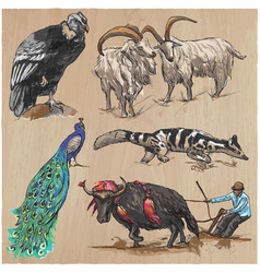 An hand drawn collection pack of animals vector