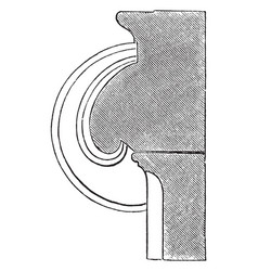 Section of a volute of an ionic capital hollowed vector
