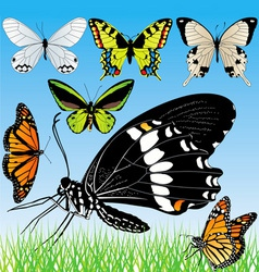 butterflies set vector image