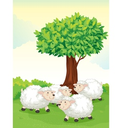 Sheeps under tree vector