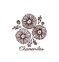 Handsketched bouquet of chamomiles vector image vector image