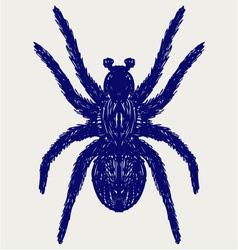 Spider tarantula vector