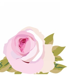 Watercolor pink rose flower isolated vector