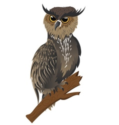 Horned owl on a branch vector