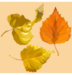 Autumn leaves of birch vector