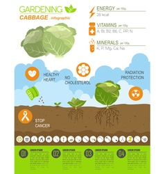 Gardening work farming infographic cabbage graphic vector