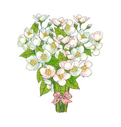 bunch bouquet of cherry blossom flowers vector image vector image