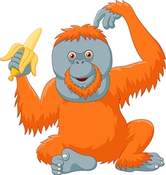 Cartoon orangutan eating banana isolated vector image