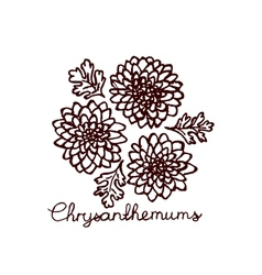 Handsketched bouquet of chrysanthemums vector image vector image