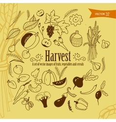 harvest1 vector image vector image