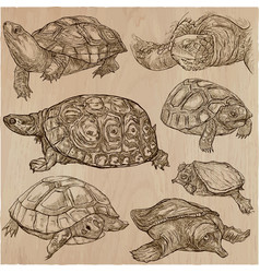 Turtles - an hand drawn collection tortoise set vector