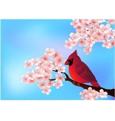 Cardinal bird on the cherry tree vector image