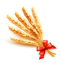 Ears of wheat with red bow vector image