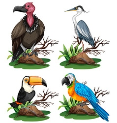Four different kinds of wild birds vector image