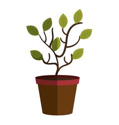 Tree plant in pot vector
