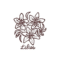 Handsketched bouquet of lilies vector image vector image