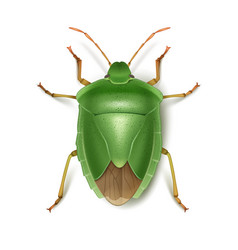 Green stink bug vector