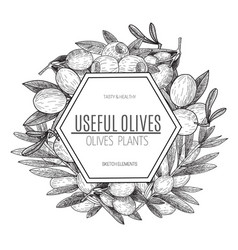 design of hand drawn olives vintage sketch vector image vector image