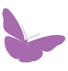Isolated butterfly silhouette vector