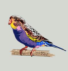 Wavy parrot vector