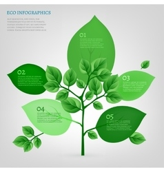Infographics bio tree vector