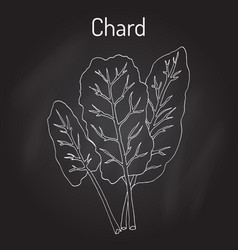 Mangold beta vulgaris or swiss chard vector